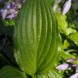 leaf-671679_960_720