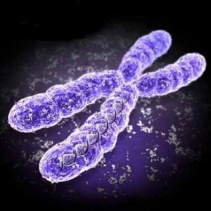 Hromosoma