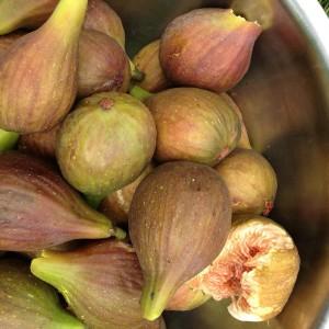 figs-183043_960_720