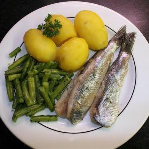 herring-74298_960_720